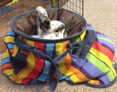 Barnacle Bart Magic Birthday Entertainer Toronto bunny